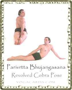 cobra-revolved