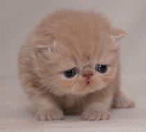 cute-sad-kitten06