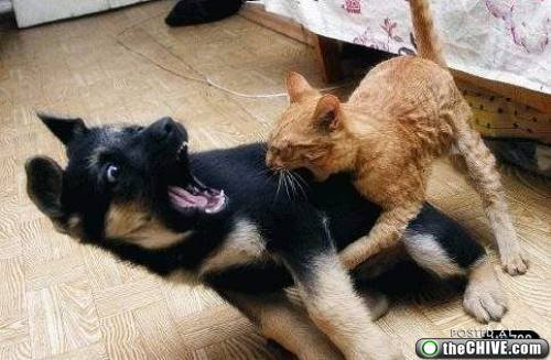 cats-dogs-fight-3