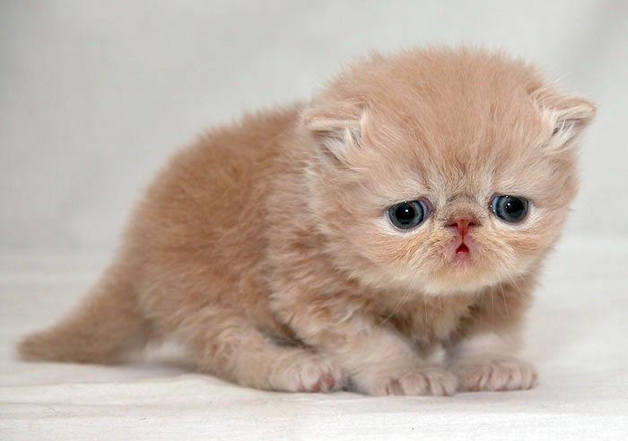 sad_kitten